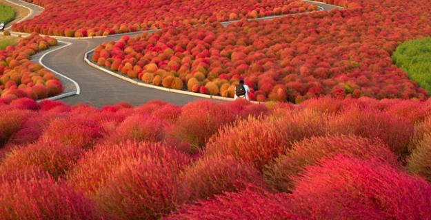 Botanic Notables: Autumn Colors in a Japanese Flower Park