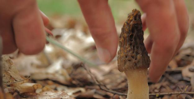 Now Forager: A Movie About Mushroom Hunters