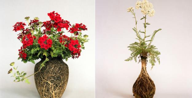 Art & Botany: Vases of Roots