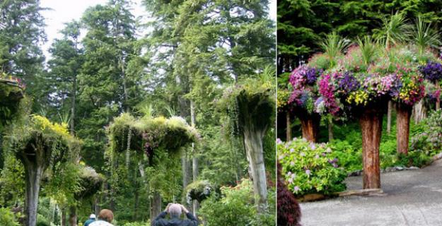 Botanic Notables: An Upside-Down Forest in Juneau