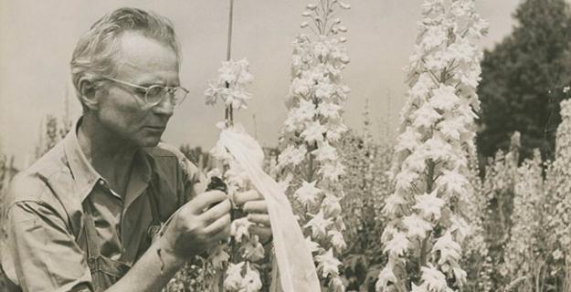 Art & Botany: Edward Steichen's Delphiniums