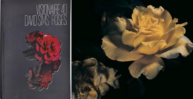 Art & Botany: David Sims Roses