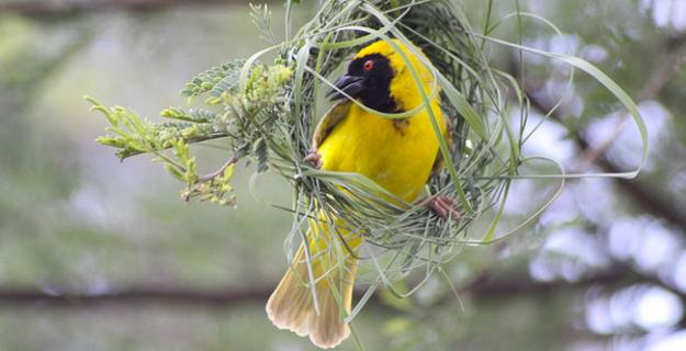 Textile in the Trees: Weaver Bird Nests