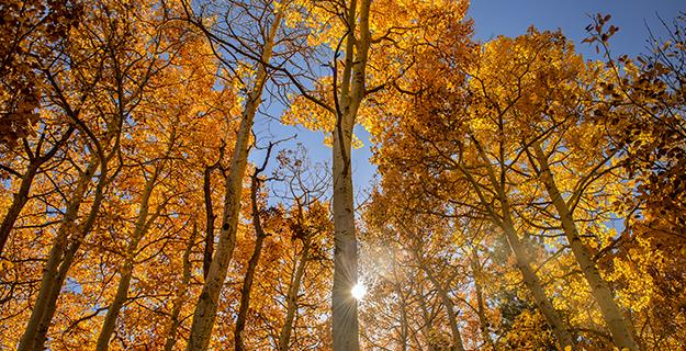 No Duds, Please: Getting Great Fall Color Trees