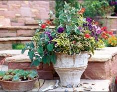 Stretch the Season with Container Plantings