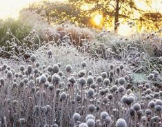 How to Prepare Your Garden for the Winter