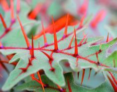 5 Strange Plants