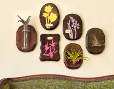 DIY Silhouettes, Air Plants & Wooden Plaques