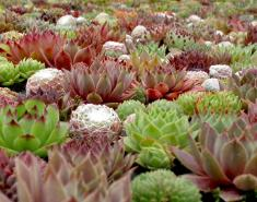 Add Succulent Treasures to Your Garden
