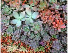 Visit: Succulent Celebration in San Diego