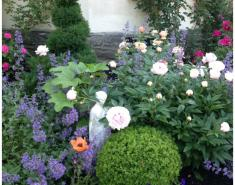 My Garden: An Affinity for Roses