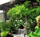 Garden Design - 05