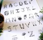 Plant Alphabet by Sasha Prood