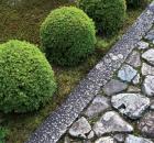 Garden Design - Moss