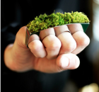 moss knuckle duster