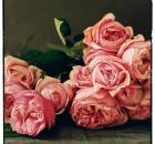 'Rosalind' David Austin roses