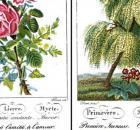 Charlotte de Latour, Le Langage des Fleurs [nid:126510]