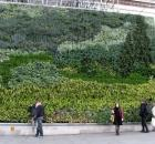 National Gallery Vertical Garden