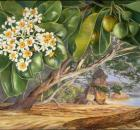 marianne north paintings