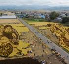 rice paddy harvest