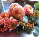 orange peach dahlias zinnias