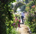 california rose garden 1