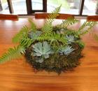 moss succulent wreath 3