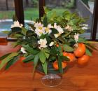 bay leaf persimmon camellias 4