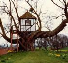 PitchfordTreeHouse