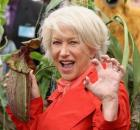 Helen Mirren plant