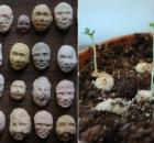 plantable seed faces