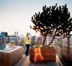 Roof Garden 01