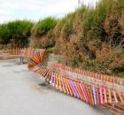 worlds longest bench