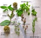 herbal medicinal bouquet