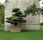 treemuseum-thumb