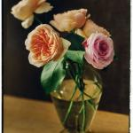 Juliet and Miranda David Austin roses