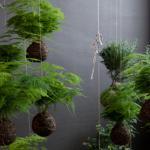 string gardens tout