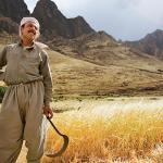 Kurdish Farmer