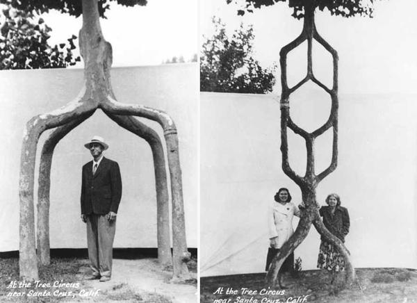 treecircus