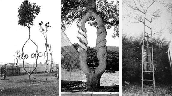 treecircus3